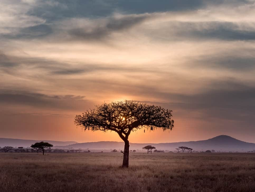 <p>IOHK To Formulate A New Mobile Network In Tanzania thumbnail