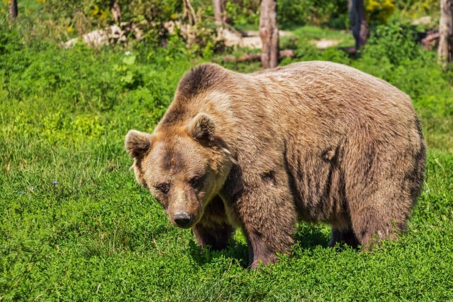 Cardano [ADA] sees red as market braces for bear impact